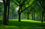 Central-Park-Green
